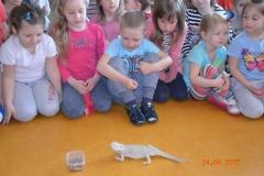 Lekcja o Zoo
