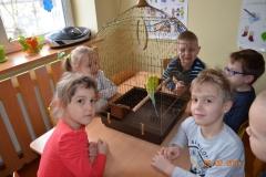 Papużki Michała